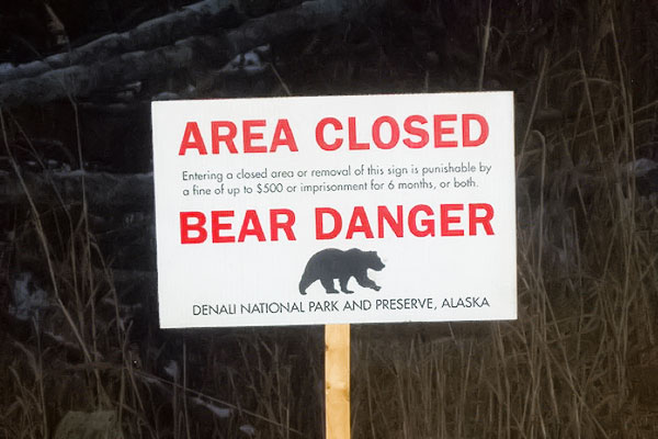 Bear Attacks The Bear Stick